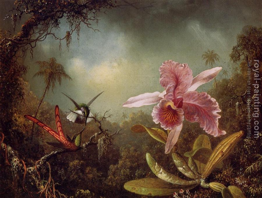 Martin Johnson Heade : Orchid and Two Hummingbirds