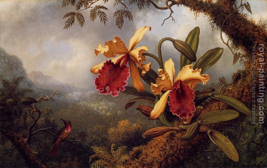 Orchids and Hummingbird IV