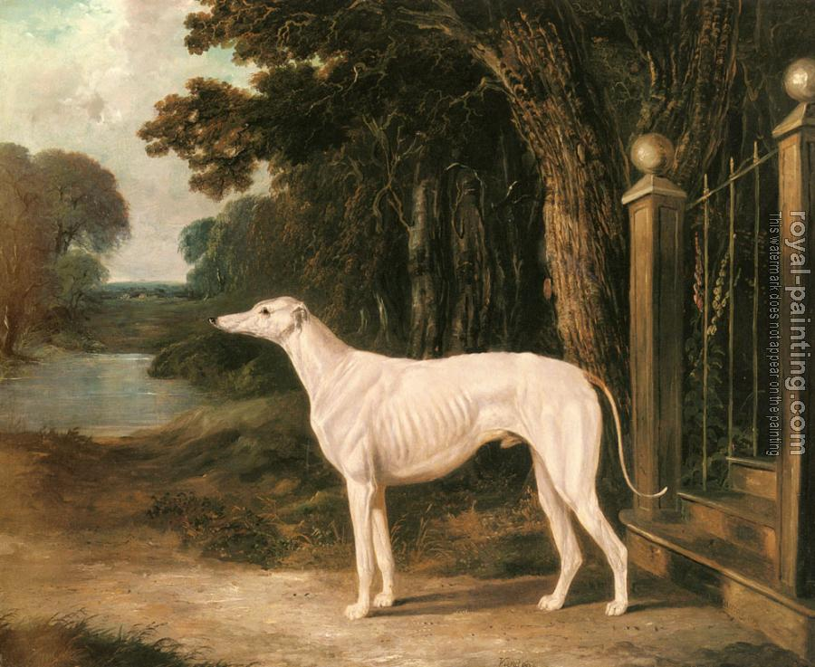 John Frederick Jr Herring : Vandeau, A White Greyhound