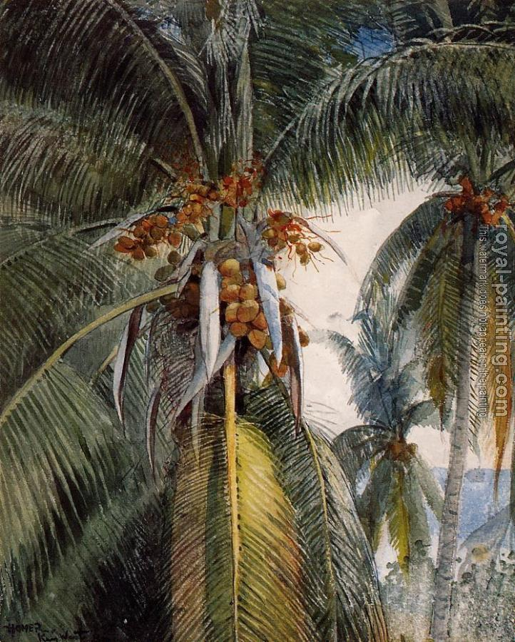 Winslow Homer : Coconut Palms, Key West