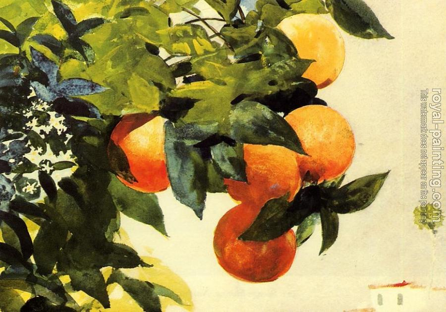 Winslow Homer : Oranges on a Branch