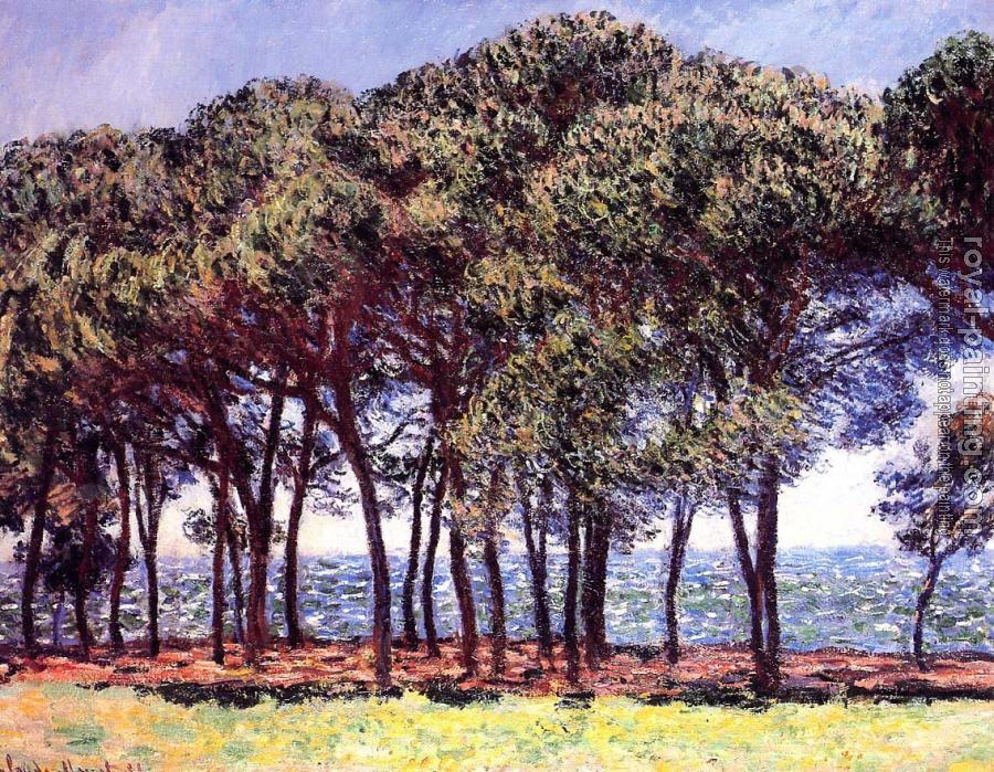 Claude Oscar Monet : Pine Trees, Cap d'Antibes
