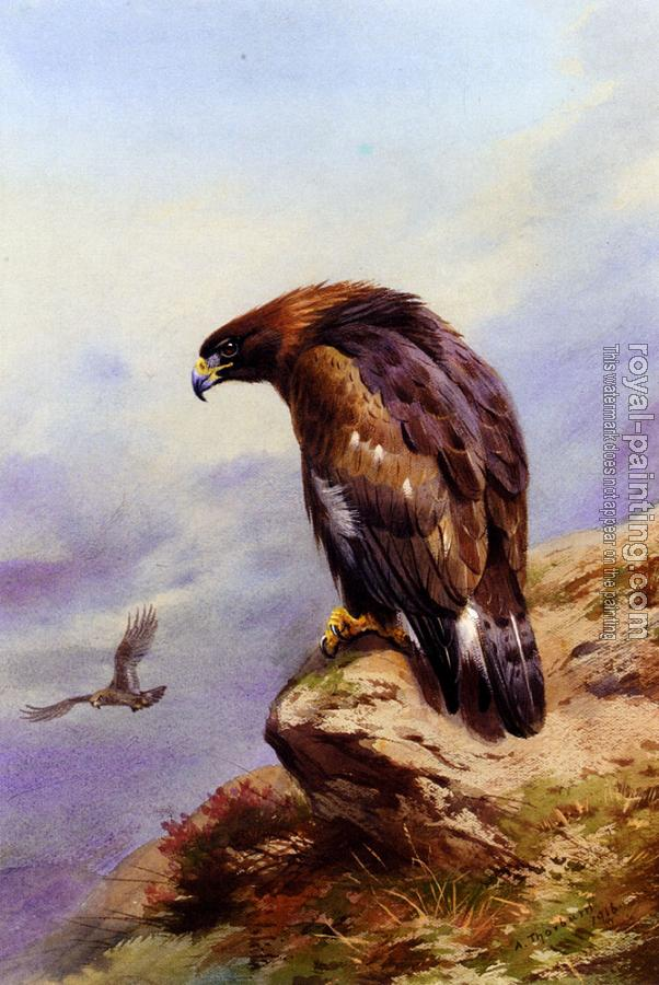 Archibald Thorburn : A Golden Eagle