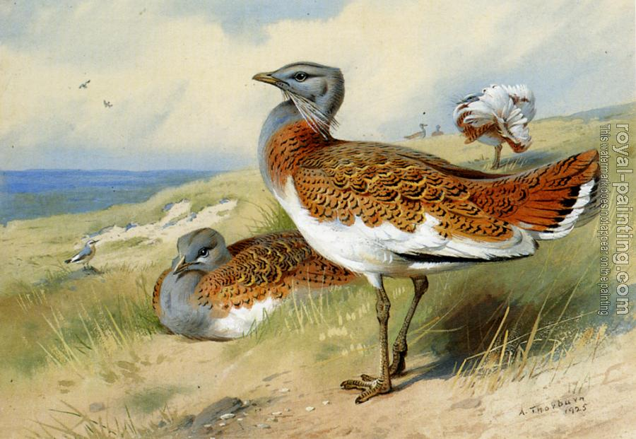 Archibald Thorburn : Great Bustards