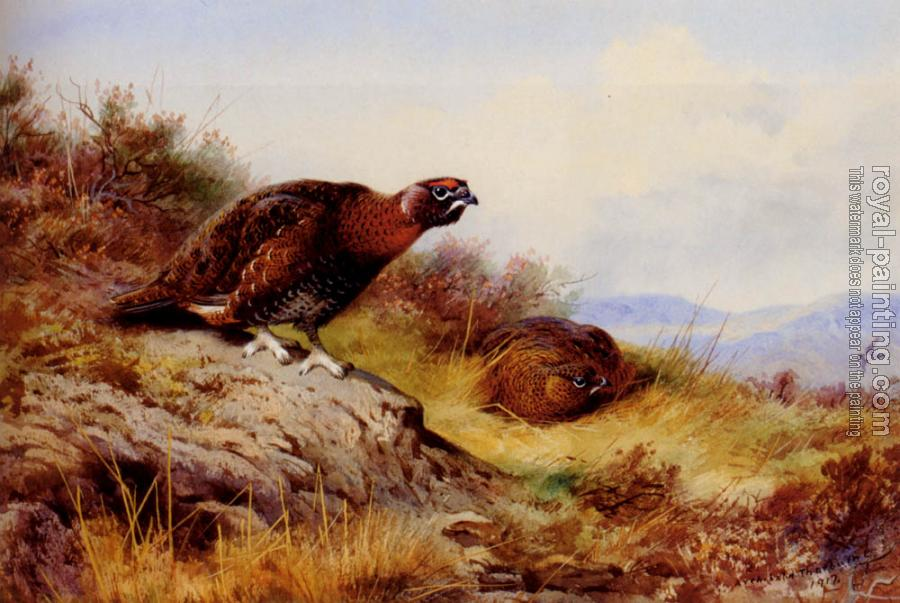 Archibald Thorburn : Red Grouse On The Moor