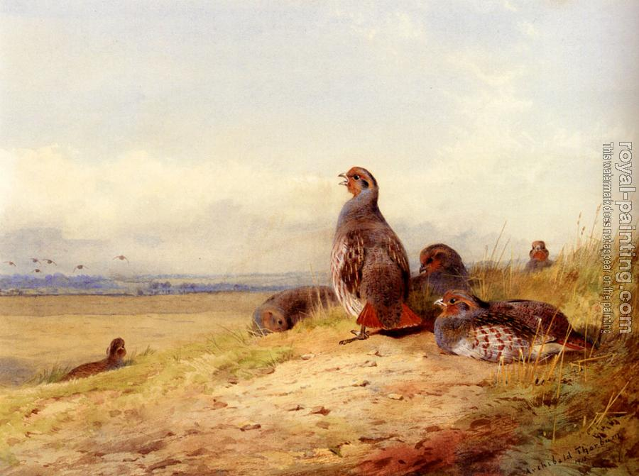 Archibald Thorburn : Red Partridges