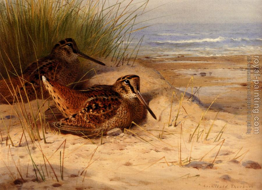 Archibald Thorburn : Woodcock Nesting On A Beach