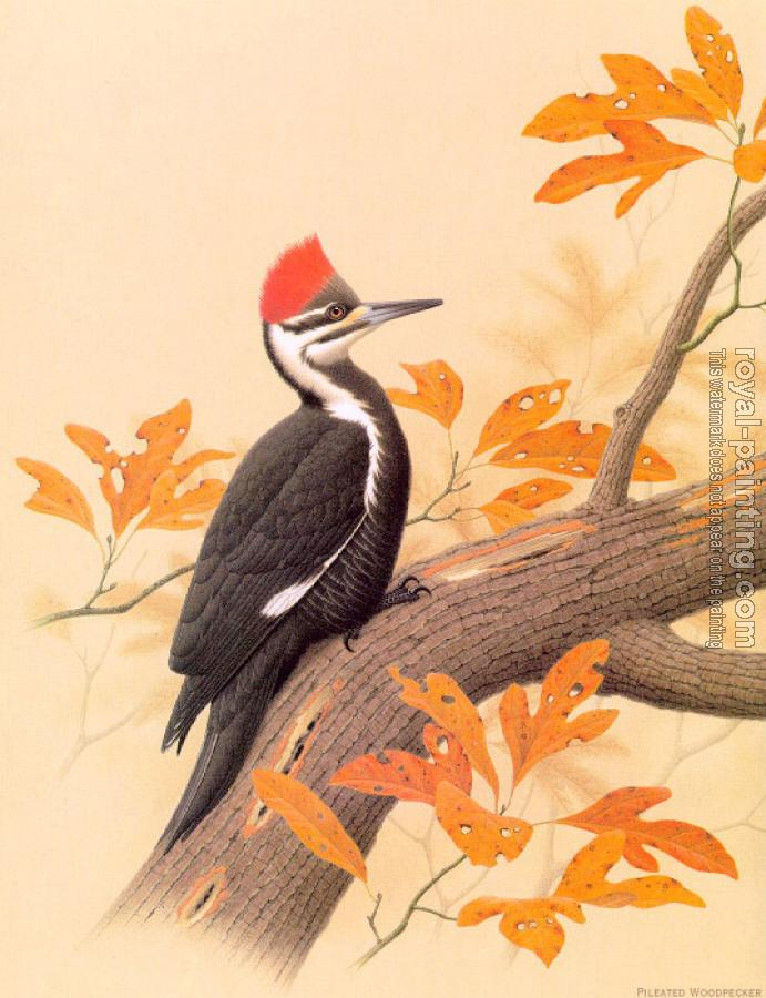 Pileated Woodpecker by William Zimmerman   Oil Painting ...
