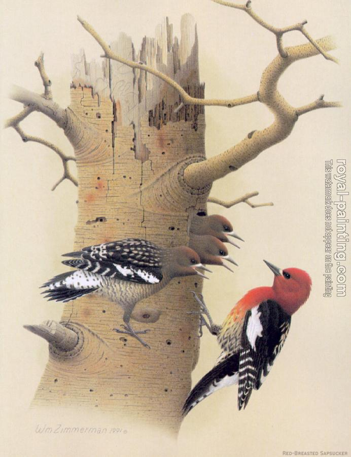 William Zimmerman : Red-breasted Sapsucker