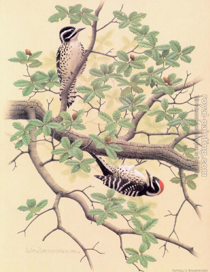 William Zimmerman : Nuttall Woodpecker